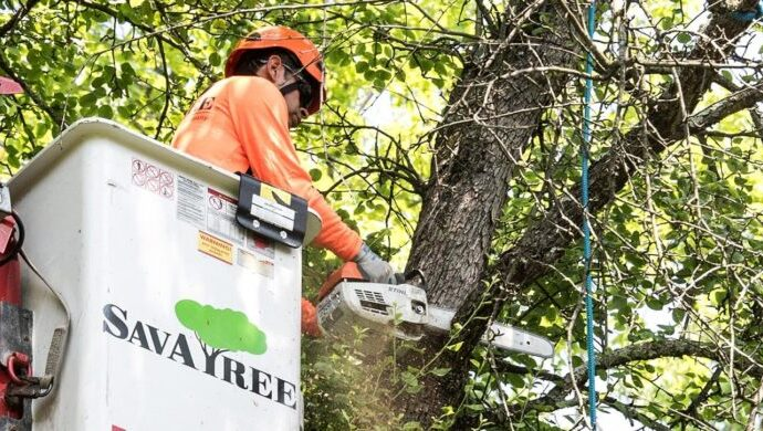 Arborist-Consultations-Des Moines Tree Trimming and Stump Grinding Services-We Offer Tree Trimming Services, Tree Removal, Tree Pruning, Tree Cutting, Residential and Commercial Tree Trimming Services, Storm Damage, Emergency Tree Removal, Land Clearing, Tree Companies, Tree Care Service, Stump Grinding, and we're the Best Tree Trimming Company Near You Guaranteed!
