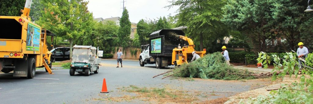 Commercial-Tree-Services-Des Moines Tree Trimming and Stump Grinding Services-We Offer Tree Trimming Services, Tree Removal, Tree Pruning, Tree Cutting, Residential and Commercial Tree Trimming Services, Storm Damage, Emergency Tree Removal, Land Clearing, Tree Companies, Tree Care Service, Stump Grinding, and we're the Best Tree Trimming Company Near You Guaranteed!