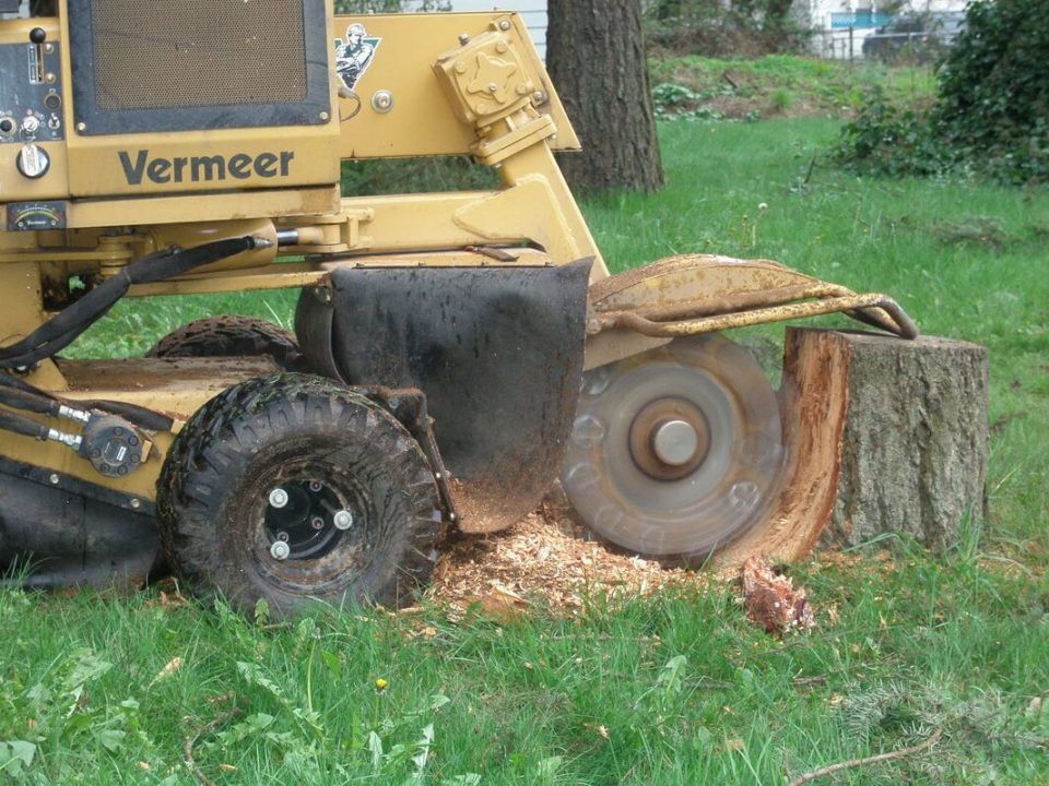 Stump-Grinding-Des Moines Tree Trimming and Stump Grinding Services-We Offer Tree Trimming Services, Tree Removal, Tree Pruning, Tree Cutting, Residential and Commercial Tree Trimming Services, Storm Damage, Emergency Tree Removal, Land Clearing, Tree Companies, Tree Care Service, Stump Grinding, and we're the Best Tree Trimming Company Near You Guaranteed!