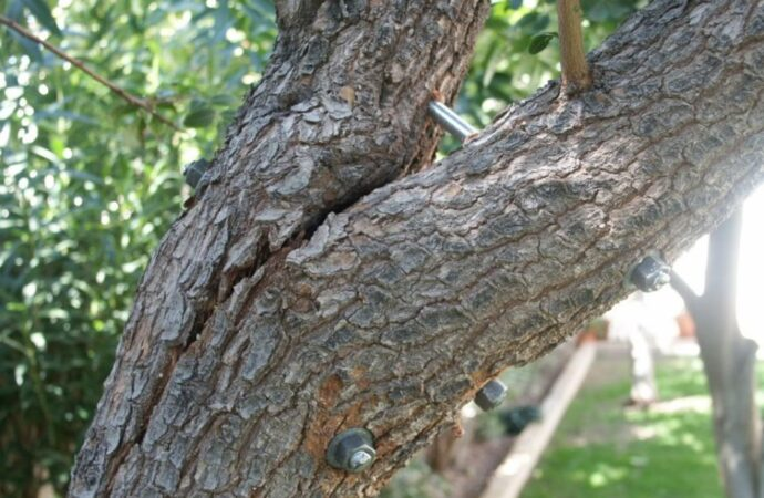 Tree-Bracing-Cabling-Des Moines Tree Trimming and Stump Grinding Services-We Offer Tree Trimming Services, Tree Removal, Tree Pruning, Tree Cutting, Residential and Commercial Tree Trimming Services, Storm Damage, Emergency Tree Removal, Land Clearing, Tree Companies, Tree Care Service, Stump Grinding, and we're the Best Tree Trimming Company Near You Guaranteed!