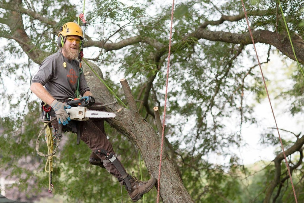 Tree-Cutting-Des Moines Tree Trimming and Stump Grinding Services-We Offer Tree Trimming Services, Tree Removal, Tree Pruning, Tree Cutting, Residential and Commercial Tree Trimming Services, Storm Damage, Emergency Tree Removal, Land Clearing, Tree Companies, Tree Care Service, Stump Grinding, and we're the Best Tree Trimming Company Near You Guaranteed!