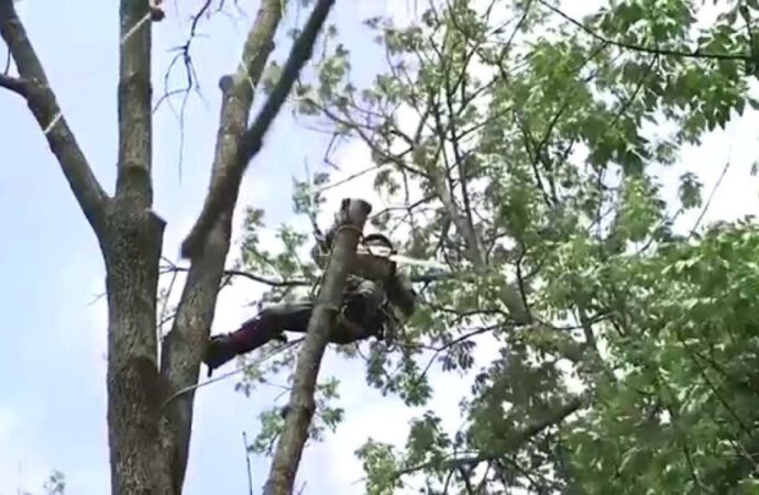 Tree-Removal-Des Moines Tree Trimming and Stump Grinding Services-We Offer Tree Trimming Services, Tree Removal, Tree Pruning, Tree Cutting, Residential and Commercial Tree Trimming Services, Storm Damage, Emergency Tree Removal, Land Clearing, Tree Companies, Tree Care Service, Stump Grinding, and we're the Best Tree Trimming Company Near You Guaranteed!