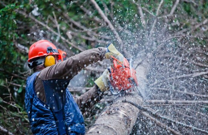Norwalk-Des Moines Tree Trimming and Stump Grinding Services-We Offer Tree Trimming Services, Tree Removal, Tree Pruning, Tree Cutting, Residential and Commercial Tree Trimming Services, Storm Damage, Emergency Tree Removal, Land Clearing, Tree Companies, Tree Care Service, Stump Grinding, and we're the Best Tree Trimming Company Near You Guaranteed!