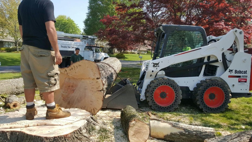 Pleasant Hill-Des Moines Tree Trimming and Stump Grinding Services-We Offer Tree Trimming Services, Tree Removal, Tree Pruning, Tree Cutting, Residential and Commercial Tree Trimming Services, Storm Damage, Emergency Tree Removal, Land Clearing, Tree Companies, Tree Care Service, Stump Grinding, and we're the Best Tree Trimming Company Near You Guaranteed!